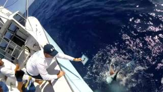 2017 Bermuda Big Game | Team Legacy | White Marlin