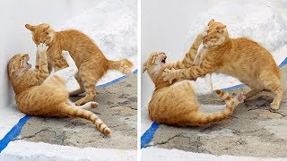 Amazing two cat fighting and doing funny things 😮😱 | cats video | cat fighting | cute cat | SUNVI