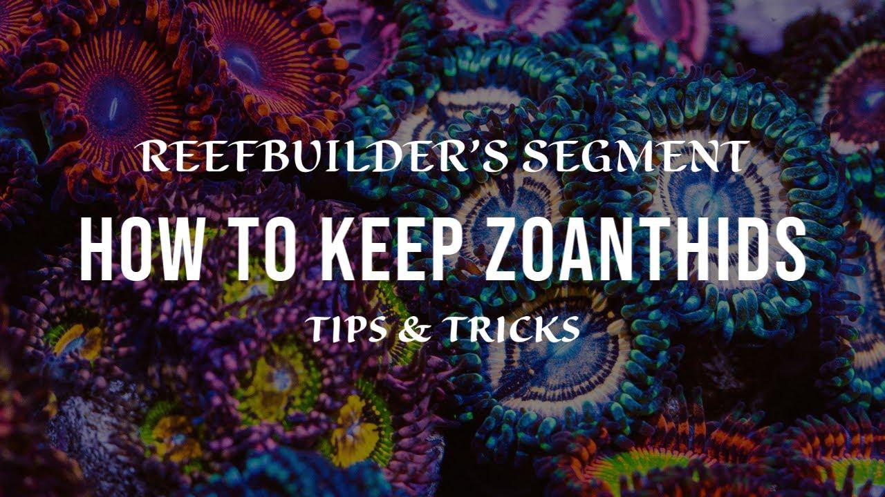 Zoanthids - Tips and Tricks (Reefbuilder's Video Segment)