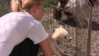 Free To Be Me - Puppy Mill Rescue Dogs Need Your Help