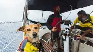 3 Guys and a Dog Sail to Belize (Sea Change - Chapter 1)