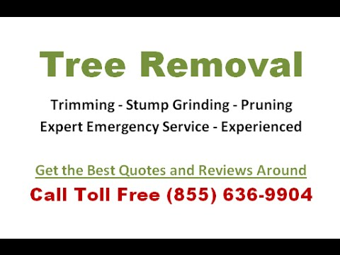 how much does tree stump removal cost free estimates and quotes youtube. Black Bedroom Furniture Sets. Home Design Ideas