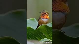 Красивые птички.
