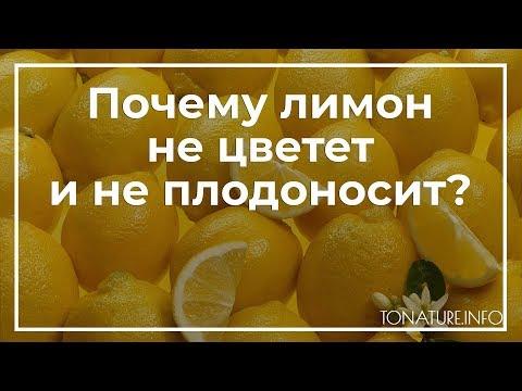 Почему лимон не цветет и не плодоносит? | toNature
