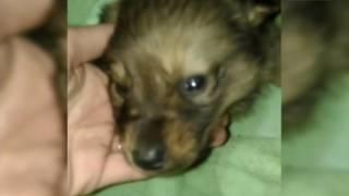 Вести-Хабаровск. Издевательства над собаками