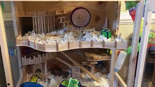 DIY hamster cage - home made luxury habitat for my 3 dwarf hamsters