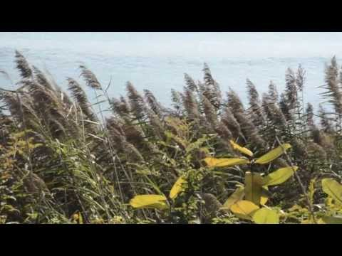 Cape Cod National Seashore - Land of Beauty at Risk