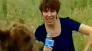 Bear attacks a reporter.avi
