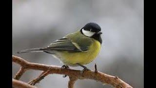 Строение птицы. Биология 7 класс