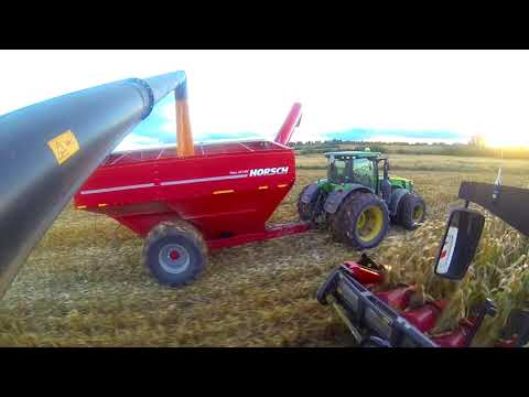 Уборка кукурузы комбайном TORUM 785