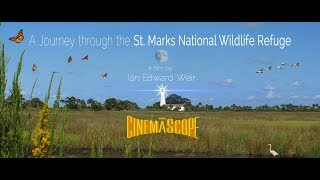 A Journey through the St. Marks National Wildlife Refuge