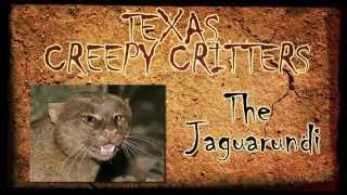 Texas Creepy Critters: The Jaguarundi
