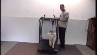 Dog Treadmill Training
