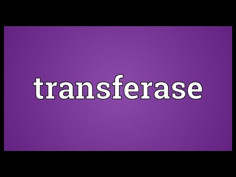 Transferase Meaning