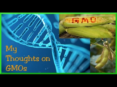 My Thoughts on GMO's | GMOs 101