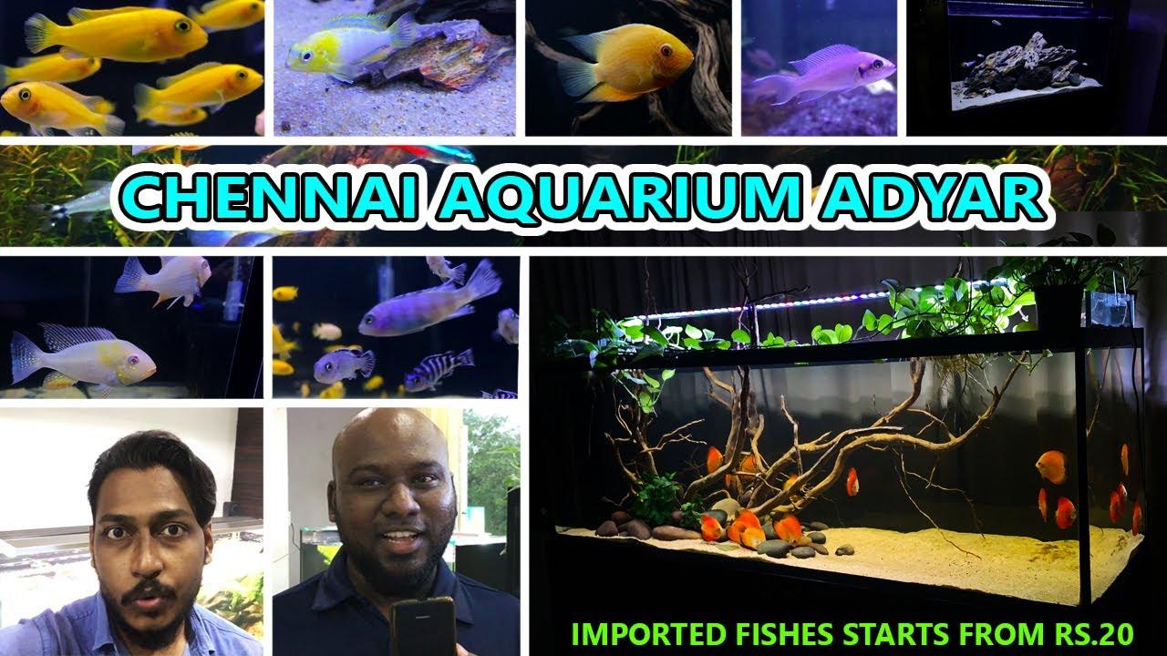 Chennai Aquarium Adyar Best Aquarium In Chennai Newly Opened Store Review With Mr Francis Youtube