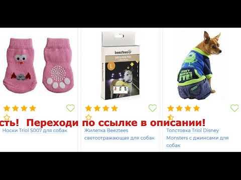 собака обувь