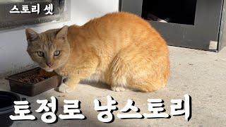 마포 합정동 길고양이 [토정로 냥스토리] 3화 / 캐릭…
