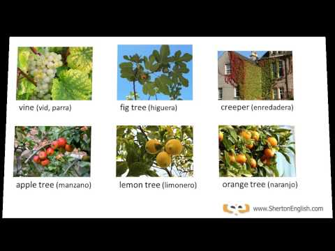 Vocabulario Inglés árboles Y Plantas Trees Plants Youtube