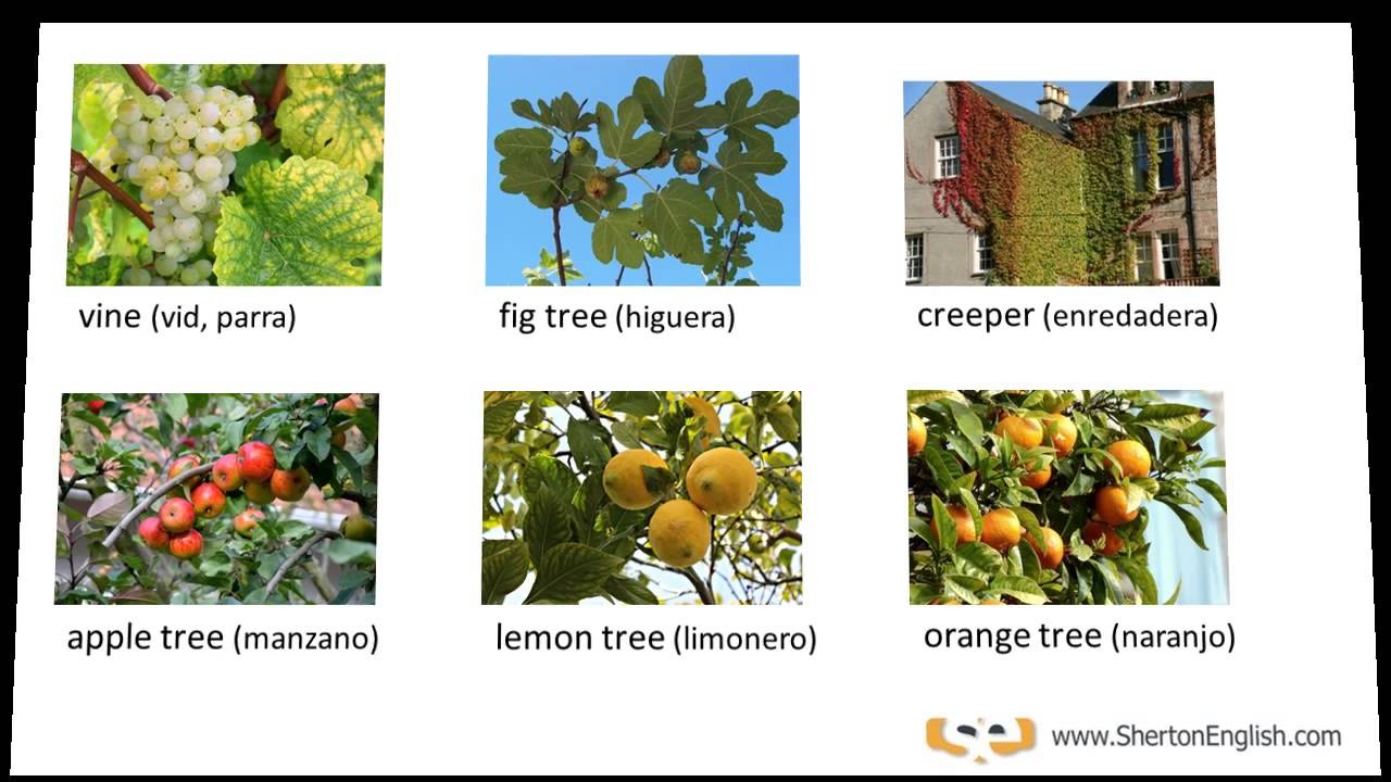 Vocabulario Inglés Árboles y Plantas (Trees & Plants)  YouTube