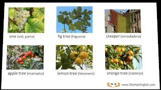 Vocabulario Inglés: Árboles y Plantas  (Trees & Plants)