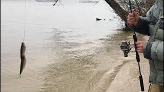 Рыбалка на спиннинг с берега Клев от которого устаёшь Весна 2020