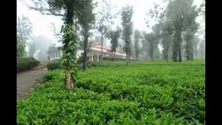 Wayanad Tea County
