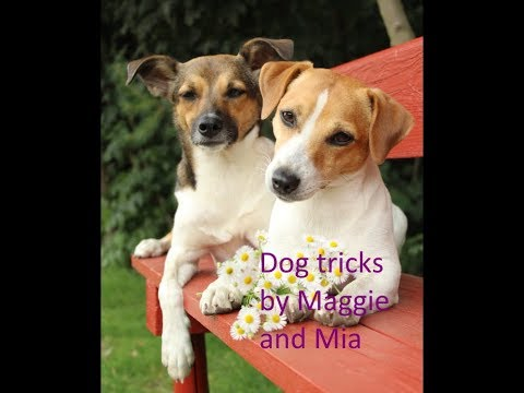Dog Tricks by Maggie and Mia