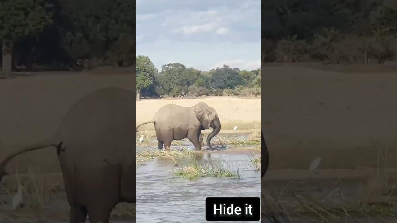 Elephant 🐘 killed Corcodile   Wildlife   Latest   Animals Fight   Trending