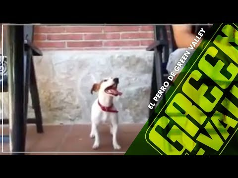Uma perro boxer saltarín slowmotion HD from YouTube · Duration:  2 minutes 17 seconds