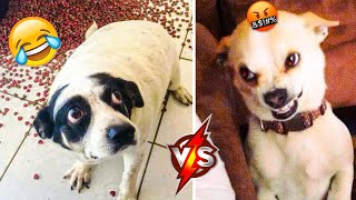 Funny Dogs Videos That Make You Laugh 🤣 - Cute And Funny Puppies 🥰