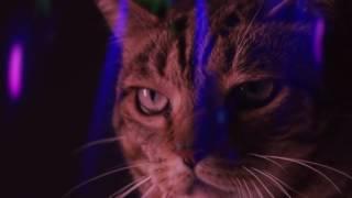 Катаны(Кошки и Коты) Зажигают В Клубе!!!!!(
