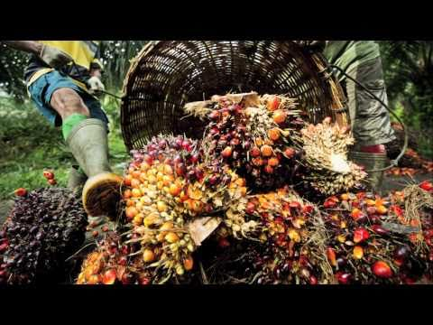 Sustainable Palm oil production
