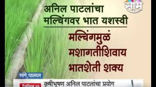 Anil Patil's Mulching Rice farming success story