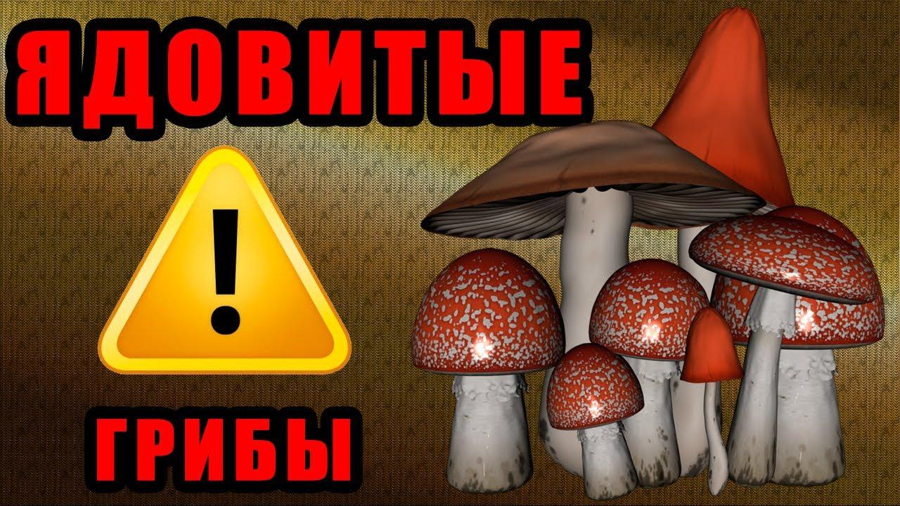 грибы рядовки фото съедобные и несъедобные фото