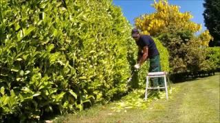 laurel hedge finished
