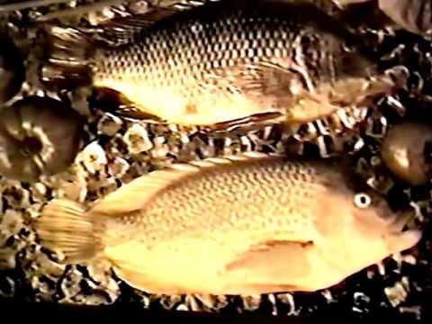 Aqua Farming Tech. 2003 Video