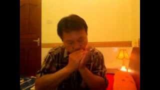 Bụi phấn (Vũ Hoàng) - Hoà tấu harmonica .
