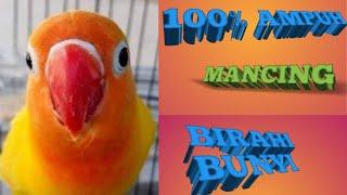 Download lagu MASTERAN LB JANTAN BIRAHI BUNYI