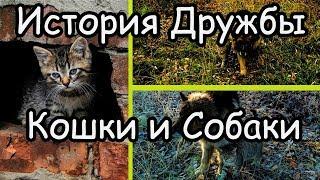 Кошка и Собака Невероятная История Дружбы Кошка и Собака Всегда Вместе Трогательное Видео