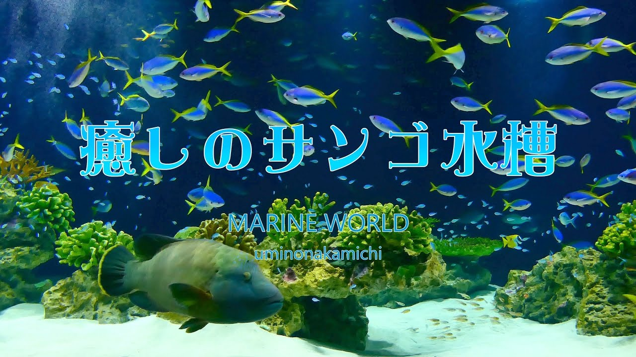 Uminonakamichi marine world - YouTube