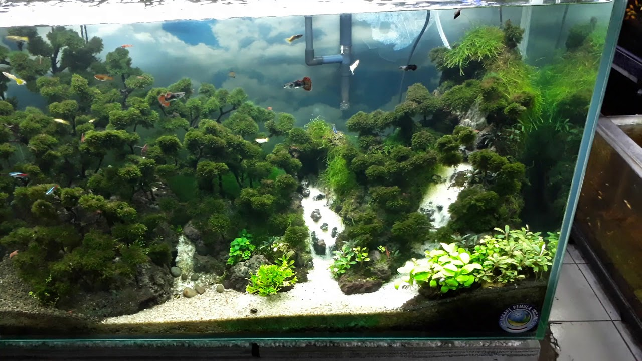Aquascape Aquarium Besar - Aquascape Ideas