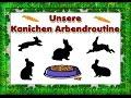 Unsere Kanichen - Arbendroutine - Julia und Co.