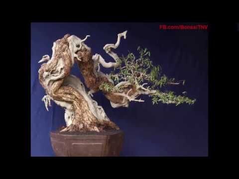 The artwork of bonsai artists special charmed me