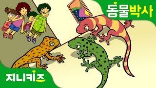 벽타는 도마뱀붙이 | 도마뱀과 도마뱀붙이의 차이점! | 동물박사★지니키즈