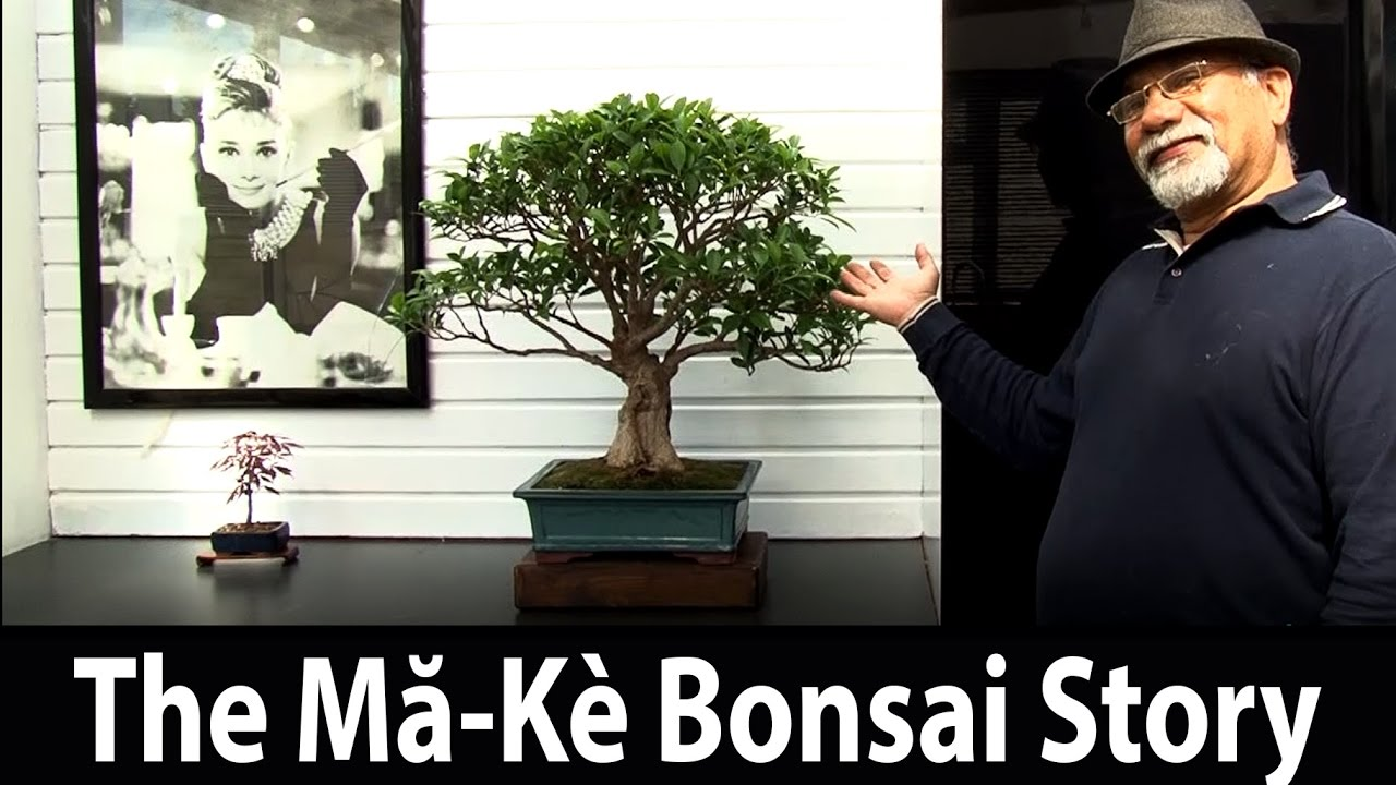 140) The Story of Mă-Kè Bonsai in London, United Kingdom