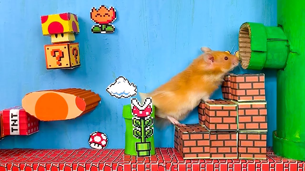 Hamster Mario 🐹😱 5 Level OBSTACLE COURSE 😱