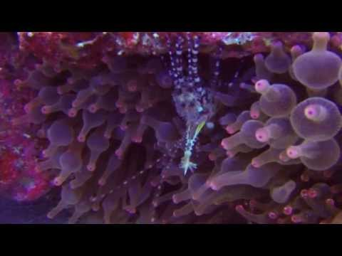 Misool Eco Resort Raja Ampat diving 2014 Indonesia