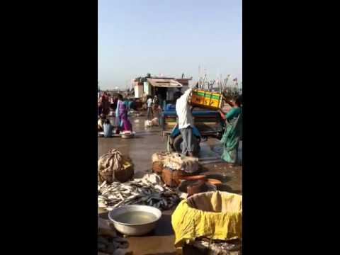 Diu  Fish Market 6