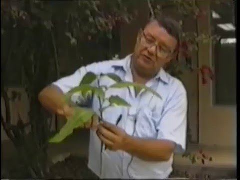 ECHO Tropical Fruits Video Series - Grafting Tropical Fruit Trees & Avocados  (Part 2 of 6)